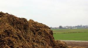 Rosja importuje obornik z Polski. Duże zapotrzebowanie ze strony ferm grzybów