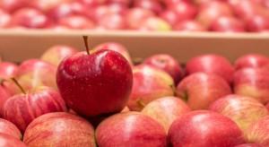 Południowy Tyrol: Zapasy jabłek znacznie niższe niż w analogicznym okresie 2017 r.