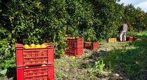 Hiszpania: Drony zapobiegają kradzieży pomarańczy w Walencji