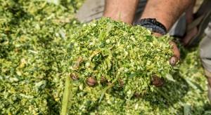 Bio-Gen rozpoczął współpracę z Katarem w zakresie kiszonek z liści palmowych