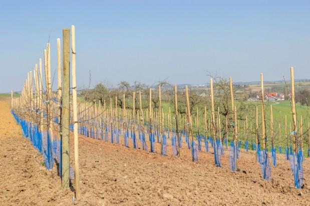 Rosja zwiększa import drzewek i sprzętu sadowniczego z Europy