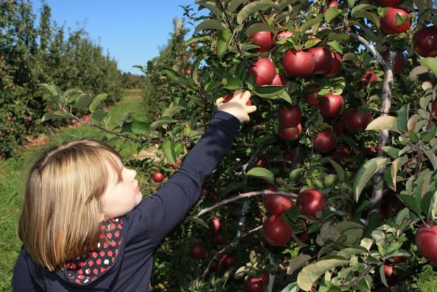 KRUS organizuje turnusy rehabilitacyjne dla dzieci rolników w 2018 r.