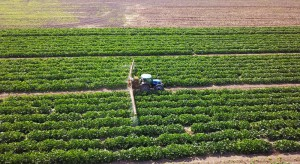 Serbska firma rolnicza planuje debiut na warszawskiej giełdzie