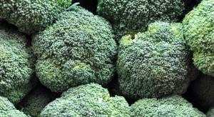 Meksyk piątym co do wielkości producentem brokułów na świecie