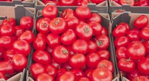 Ceny pomidorów na Ukrainie stopniowo spadają