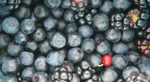 Rośnie popyt na owoce leśne i grzyby na rynkach zagranicznych