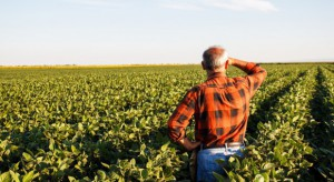 Polscy rolnicy coraz chętniej korzystają z wiosennych ubezpieczeń
