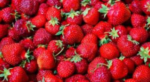 Polska wyeksportuje w tym sezonie mniej mrożonych truskawek