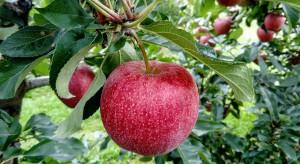 Grudynia - odrodzenie dawnej potęgi sadowniczej?