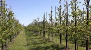 GUS: Drzewa i krzewy owocowe dobrze przezimowały, niewielkie uszkodzenia truskawek
