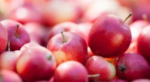 W Sanoku rozdają jabłka za darmo