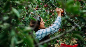 Ustawa o pomocy przy zbiorach – ile ochrony pracownika i korzyści dla rolnika?