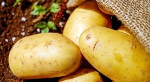 Szwecja: Młode ziemniaki wylicytowano za 820 zł/kg!
