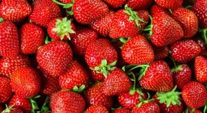 ZSRP: Medialne oczernianie polskich producentów truskawki to celowe działanie