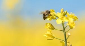 Bayer o zakazie stosowania neonikotynoidów: niekorzystne rozwiązanie dla europejskiego rolnictwa