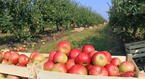 GUS: W 2017 r. zbiory jabłek o 1/3 niższe niż rok wcześniej