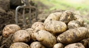 Tanie ziemniaki nie tylko w Polsce