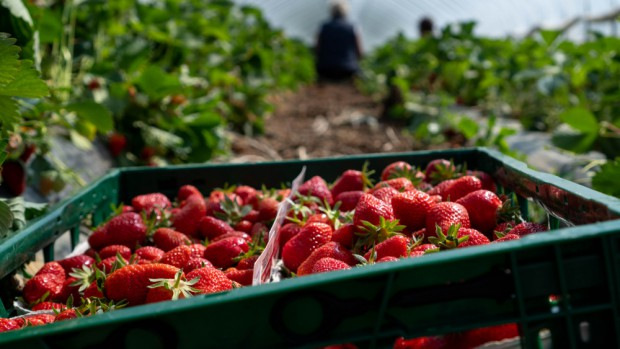 Czerwińsk: rolnik wystawiał fałszywe dokumenty umożliwiające Ukraińcom pracę