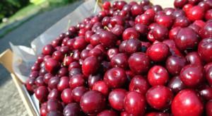 Ukraina: podaż wiśni w bieżącym sezonie może być ograniczona