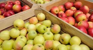 Sytuacja na rynku jabłek - czego spodziewać się w sezonie 2018?