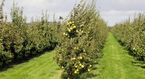 Rozszerzona rejestracja insektycydu o kolejne gatunki sadownicze
