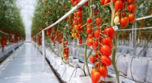 We Francji powstanie szklarnia pomidorów za 40 mln EUR