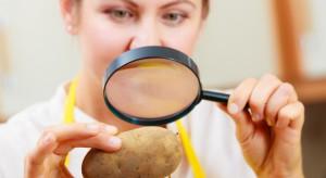 PIORIN nasiliła kontrole importowanych warzyw