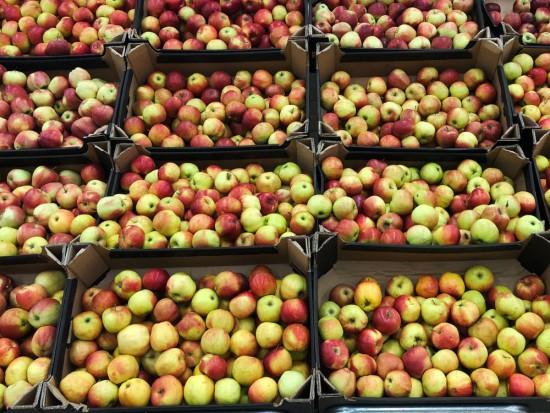 WAPA: W polskich chłodniach w maju przechowywano 177 tys. ton jabłek