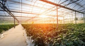 Rosja chce zwiększyć uprawy warzyw szklarniowych, aby uniezależnić się od importu