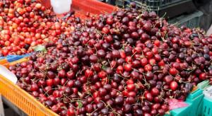 Zbyt niskie ceny czereśni. Plantatorzy zastanawiają się nad celowością produkcji