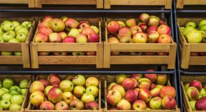 Analiza rynku owoców IERiGŻ. Ceny jabłek w maju 0 45% wyższe niż rok wcześniej