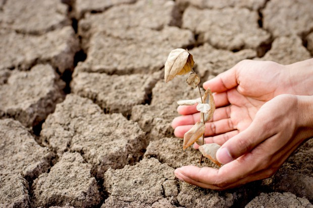 Sasin: 20 czerwca na posiedzeniu rządu informacja nt. stanu suszy w Polsce