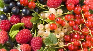 KRIR: Czy występuje zmowa cenowa na rynku owoców miękkich?