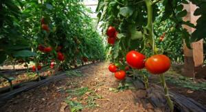 Spodoptera frugiperda - zagrożenie dla kukurydzy, warzyw psiankowatych