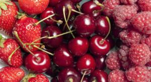 Spadają ceny malin, truskawek i wiśni na rynkach hurtowych