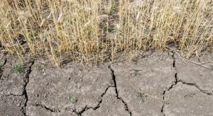 Wojewoda mazowiecki: bez oszacowania strat po suszy rolnicy nie dostaną pomocy