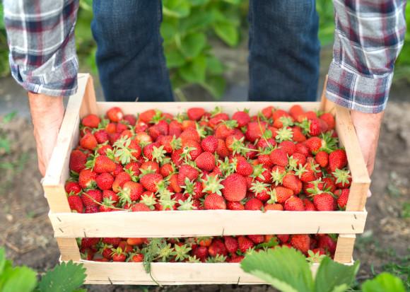 Spadła opłacalność produkcji owoców w Polsce