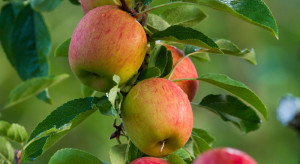 Jak poprawić produktywność sadu przez nawadnianie?