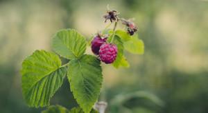 Wsparcie rozwoju ogrodnictwa na Wołyniu - 10 najważniejszych faktów