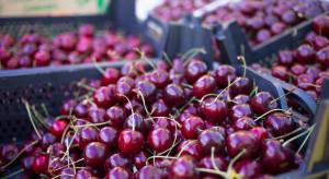 Rynki hurtowe: Podrożały czereśnie, spadły ceny wiśni