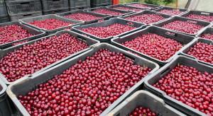 Mołdawski potentat sadowniczy planuje intensywny rozwój produkcji wiśni