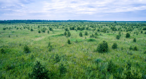 Wnioski na wsparcie finansowe na zalesianie gruntów rolnych do końca lipca