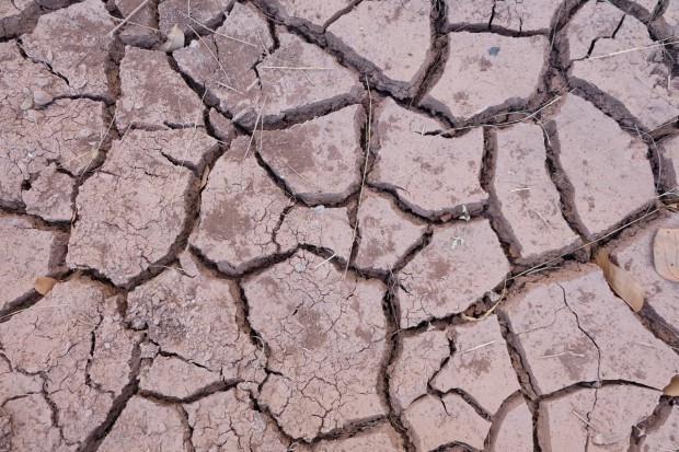 IUNG: susza rolnicza nie ustępuje. Rośnie liczba gmin i powierzchnia upraw z suszą