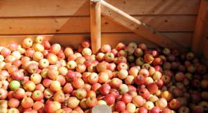 Ceny powinny być regulowane między zakładem a rolnikiem