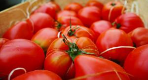 Turcja: ograniczona podaż pomidorów doprowadziła do znacznego wzrostu cen