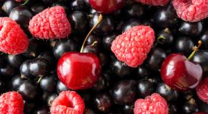 Rynek hurtowy Elizówka skupuje pierwsze owoce