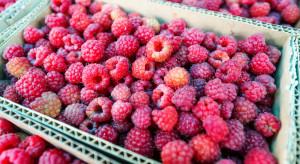 Przetwórcy: Niskie ceny owoców to wina rolników. Wyprodukowali ich za dużo