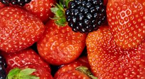 MRiRW zapowiada zwiększenie kontroli importowanych owoców miękkich
