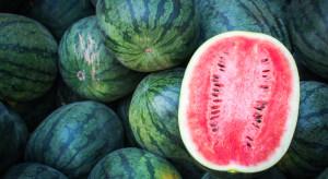 Spadają ceny arbuzów w Turcji. To szansa dla europejskich importerów?