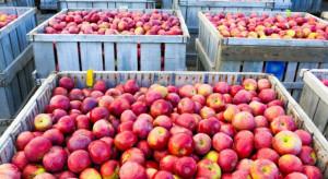 Zakład Polkon 2-krotnie podwyższył ceny jabłek przemysłowych - do 35 gr/kg